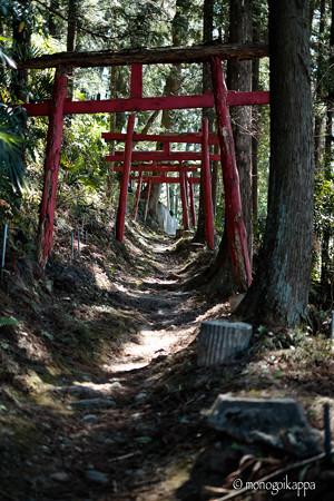02朽ちかけた鳥居のトンネル-3246