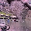 Photos: カヌーで桜お花見・・弘明寺大岡川 20140406