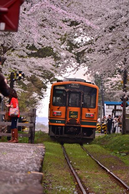 再び桜のトンネルをくぐって・・20140501