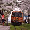 Photos: 再び桜のトンネルをくぐって・・20140501