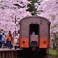 到着したストーブ列車。。桜の中で・・20140501
