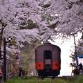 再び桜のトンネルをくぐって。。20140501