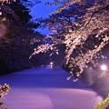 Photos: 夕暮れの弘前城公園お堀・・ピンクの絨毯・・20140501