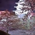 綺麗な夜桜と弘前城の風景・・20140501