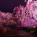 思いにふける風景・・弘前城公園夜桜
