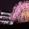 弘前城と見事なしだれ夜桜・・20140501
