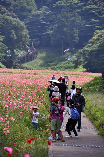 ポピー畑は賑わう。。くりはま花の国 20160529