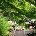 鎌倉 長谷寺へ。。新緑の木々。。20160624