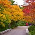 染まりつつある紅葉。。昭和記念公園 日本庭園 20161110