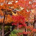 吾妻屋の紅葉。。昭和記念公園 日本庭園 20161110