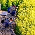 写真: 吾妻山公園の菜の花畑でさまざまなフォトグラファーたち。。20170121