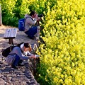 吾妻山公園の菜の花畑でさまざまなフォトグラファーたち。。20170121