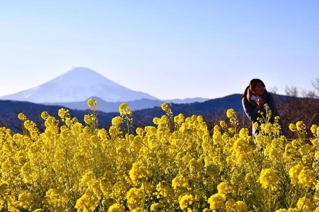 綺麗な西陽浴びて菜の花富士山バックに記念撮影。。吾妻山公園 20170121