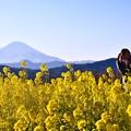 写真: 綺麗な西陽浴びて菜の花富士山バックに記念撮影。。吾妻山公園 20170121