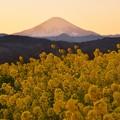 西陽の向こうには富士山。。日没へ行く 吾妻山公園 20170121