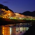 周りが暗くなってライトアップが引き立つ河津桜。。静寂な河津川流れ 20170218
