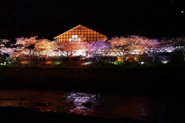 温泉でも入ってライトアップされて河津桜観賞。。20170218