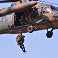 Photos: 木更津航空祭。。負傷者救出デモストレーション ブラックホークへ