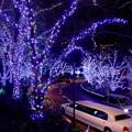 写真: 東京ミッドタウン