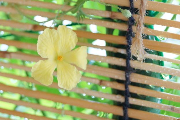 Photos: こんなところで咲くの?