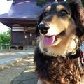 Photos: 狛犬太郎