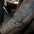 Photos: 怪獣酒場のゴモラさんのお背中のしわくちゃ具合が愛しい