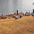 Photos: 鳥の群れ