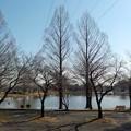 Photos: 木と池