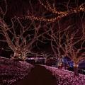 写真: イルミネーション(2) ~彩る木々~