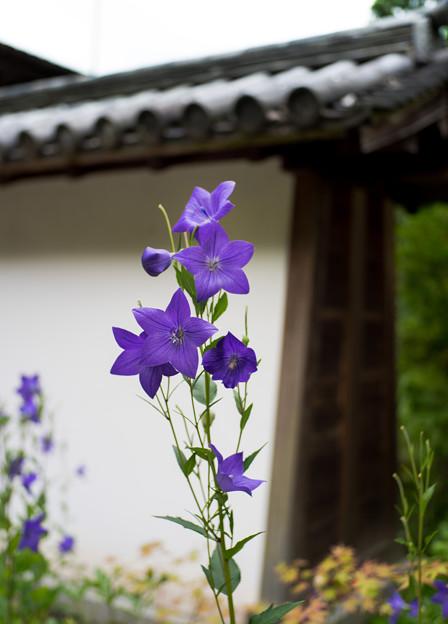 enjoji_kikyo-06197