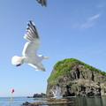 写真: 海鳥