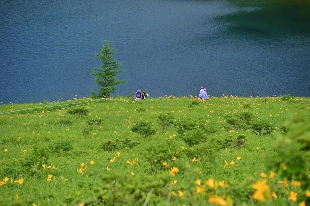 野反湖 ノゾリキスゲの咲くころ?