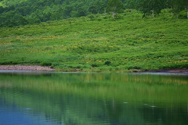 野反湖 ノゾリキスゲの咲くころ(17)