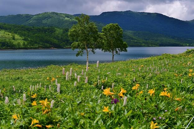 野反湖 ノゾリキスゲの咲くころ(23)