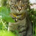 史上最高に凛々しい仔猫