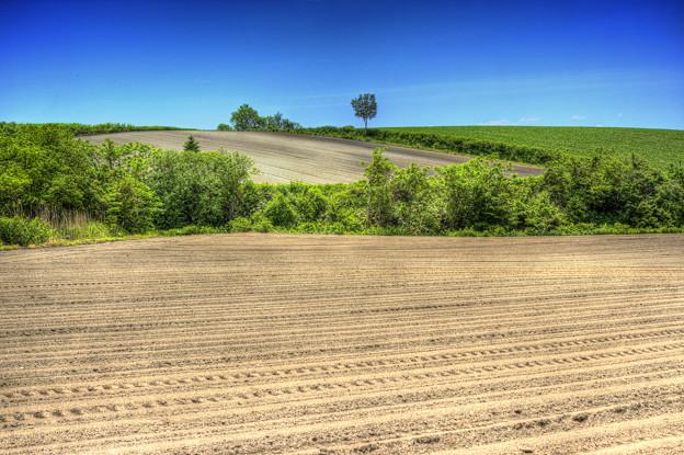 種まき時期の畑 3
