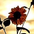 写真: 朝焼けの光の中に・・・