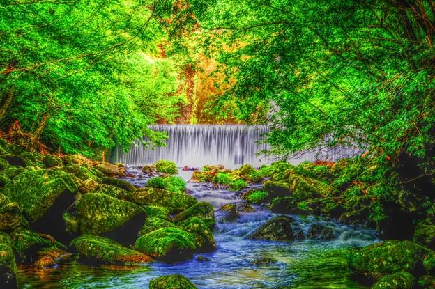 GreenForest ~天城渓谷~