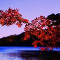 写真: 今年も紅葉を見に行ってみた・・・(*´з`)