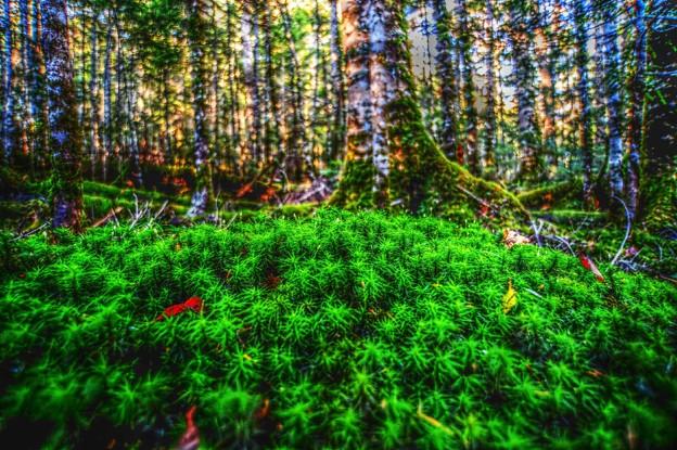 ようこそ・・・もののけの森へ