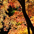 写真: 紅葉の錦 神のまにまに・・・其の弐