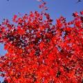 秋の空 ~Blue&Red~