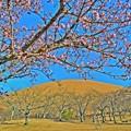 写真: 大室山は春・・・いずれにしても春