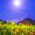 写真: 月下菜花