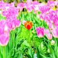 ほ~ら、春先小紅(*´з`)・・・其の弐