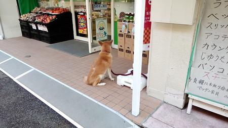 ローソンストア100に、ご主人様を待つ犬が!