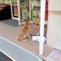 写真: ローソンストア100に、ご主人様を待つ犬が!