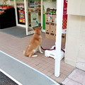 Photos: ローソンストア100に、ご主人様を待つ犬が!