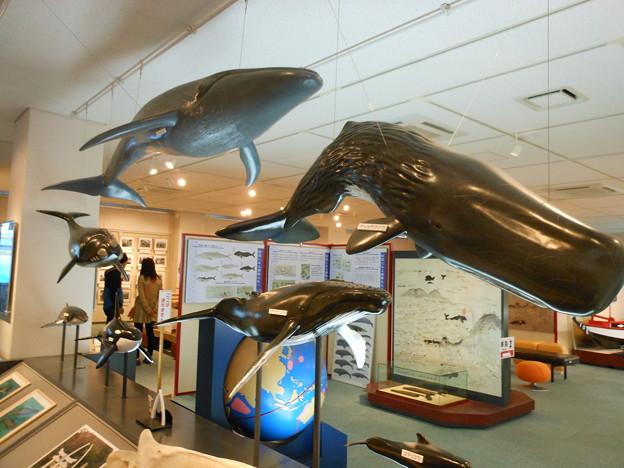 五島列島*鯨賓館ミュージアム1