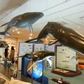 Photos: 五島列島*鯨賓館ミュージアム1
